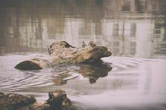 Boomstam van hout in de rivier stock foto