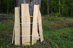 Boomstam van kant van de wegboom door houten planken tijdens een wegenbouw wordt beschermd die royalty-vrije stock fotografie