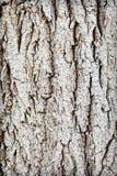 Boomstam van oud hout - ruwe schors royalty-vrije stock foto's