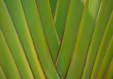 Boomstam van palm Stock Foto
