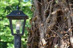 Boomstamboom en lamp Stock Afbeelding