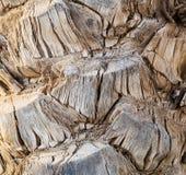 Boomstamdetail van palm als achtergrondtextuurpatroon, close-up stock fotografie