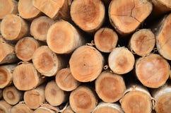 boomstammen Stock Afbeelding