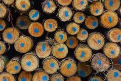 boomstammen Royalty-vrije Stock Foto's