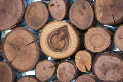 Boomstammen en houten ringen Stock Foto's