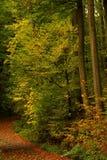 Boomstammen in kleurrijke bosverticaal Royalty-vrije Stock Fotografie