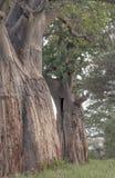 Boomstammen van bomen Royalty-vrije Stock Afbeelding