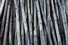 Boomstammen van bomen Stock Foto