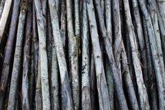 Boomstammen van bomen Royalty-vrije Stock Afbeeldingen