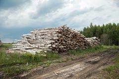 Boomstammen van bomen in de voorgrond worden en worden gestapeld gesneden die Stock Foto's