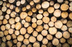 Boomstammen van bomen met de aangeduide diameter van de boomboomstam Royalty-vrije Stock Afbeeldingen