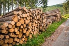 Boomstammen van bomen met de aangeduide diameter van de boomboomstam Stock Afbeelding