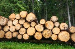 Boomstammen van bomen met de aangeduide diameter van de boomboomstam Royalty-vrije Stock Fotografie