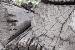 Boomstammen van bomenbesnoeiing en gestapeld royalty-vrije stock fotografie