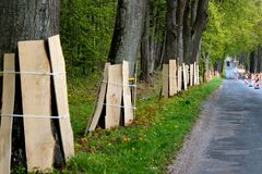 Boomstammen van kant van de wegbomen die door houten planken tijdens een wegenbouw worden beschermd stock fotografie