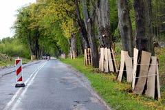 Boomstammen van kant van de wegbomen die door houten planken tijdens een wegenbouw worden beschermd stock afbeelding
