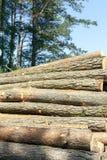 Boomstammen van pijnboombomen, hout Stock Foto