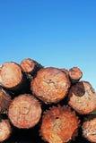 Boomstammen van pijnboomhout Stock Fotografie