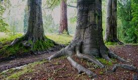 Boomstammen van twee verbazende bomen in bos royalty-vrije stock foto