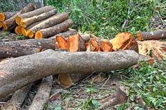 Boomstammen van Verminderde Bomen royalty-vrije stock foto