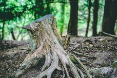 Boomstomp in Forest Close omhoog Takken en bomen excentrisch royalty-vrije stock foto