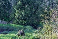 Boomstomp in het gras stock foto's