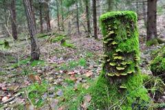 Boomstomp met mos en paddestoel Royalty-vrije Stock Foto