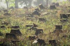 Boomstompen in een duidelijk bos royalty-vrije stock afbeelding