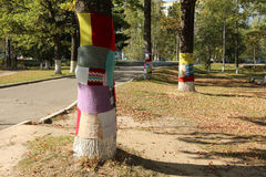 Boomsweater (Beklede boom) Stock Fotografie