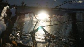 Boomtak in de van de het zonlichtaard van de ijs bosrivier het landschapswinter die wordt bevroren stock videobeelden