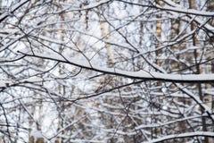 Boomtak in de winterbos Stock Afbeeldingen
