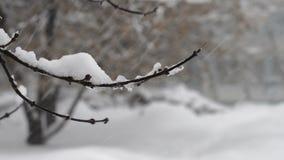 Boomtak die die in de wind slingeren, met sneeuwclose-up tijdens de grote sneeuwval in Moskou wordt behandeld stock videobeelden