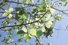 Boomtak en groene bladeren royalty-vrije stock foto's