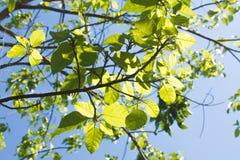 Boomtak en groene bladeren royalty-vrije stock foto
