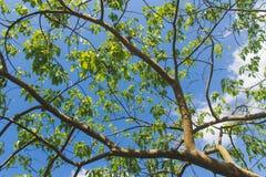 Boomtak en groene bladeren stock afbeeldingen