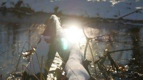 Boomtak in het van het de aardlandschap van de ijs bosrivier de winterzonlicht dat wordt bevroren stock video