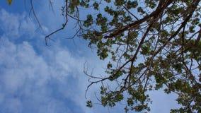 Boomtak met blauwe hemel en wolk stock videobeelden