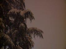 Boomtak met sneeuw wordt behandeld die stock video