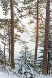 Boomtak met zware sneeuw wordt behandeld die royalty-vrije stock foto's