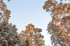 Boomtak met zware sneeuw wordt behandeld die stock foto