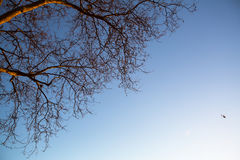 Boomtak zonder bladeren tegen de blauwe hemel nave Stock Fotografie