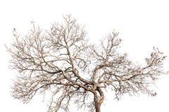Boomtakjes met naakte boomstammen en takken Royalty-vrije Stock Fotografie