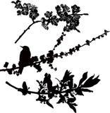 Boomtakken in bloem Stock Afbeelding