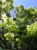 Boomtakken in de parktuin Stock Afbeelding