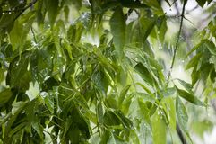Boomtakken in de regen Royalty-vrije Stock Afbeeldingen