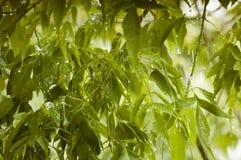 Boomtakken in de regen Stock Afbeeldingen