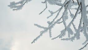 Boomtakken in de sneeuw stock footage