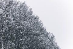 Boomtakken in de sneeuw Sneeuwkronen van bomen De winter in het park, de winter op de bos Mooie wintertijdachtergrond stock foto's