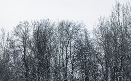 Boomtakken in de sneeuw De winter in het park, de winter op de bos Mooie wintertijdachtergrond royalty-vrije stock fotografie