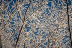 Boomtakken in de vorst tegen de hemel, close-up stock fotografie